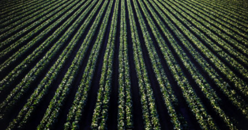 agriculture, Robotics, agricultural produce, Robots, agricultural sector