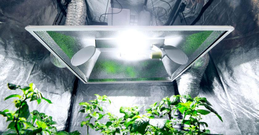 Using A Grow Tent, grow tent, successful at indoor gardening, raise plants indoors, indoor gardening