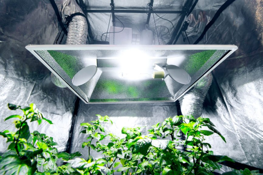 Using A Grow Tent, grow tent, successful at indoor gardening, raise plants indoors, indoor gardening