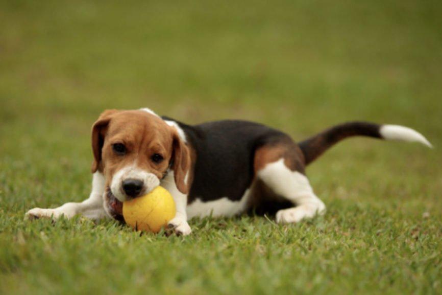 Pet Camera, Wireless Pet Camera, Best Pet Camera, Pet Owner, Pet Cam
