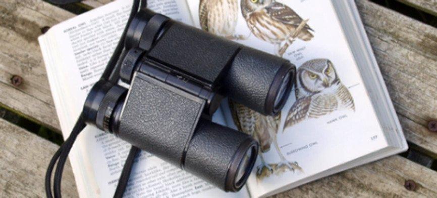 Bird Watchers, Tropical Destinations For Bird Watchers, Destinations For Bird Watchers, best spotting scope, exotic bird species