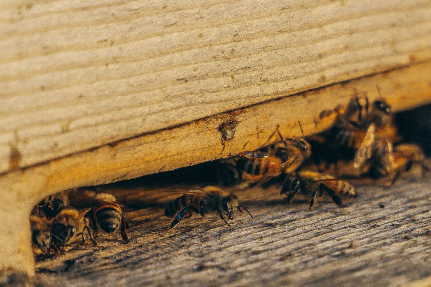 Call an Exterminator, exterminate insects, exterminate rodents, pest control, species of pests