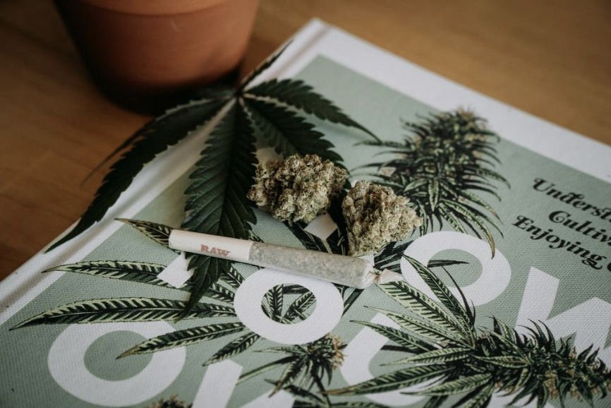 Cannabis Helps Stress And Anxiety, medicinal plants, Stress And Anxiety, Chemical Profile of Cannabis, Anxiolytic Effects