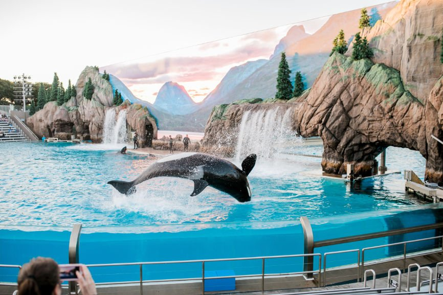 Killer Whale at Seaworld
