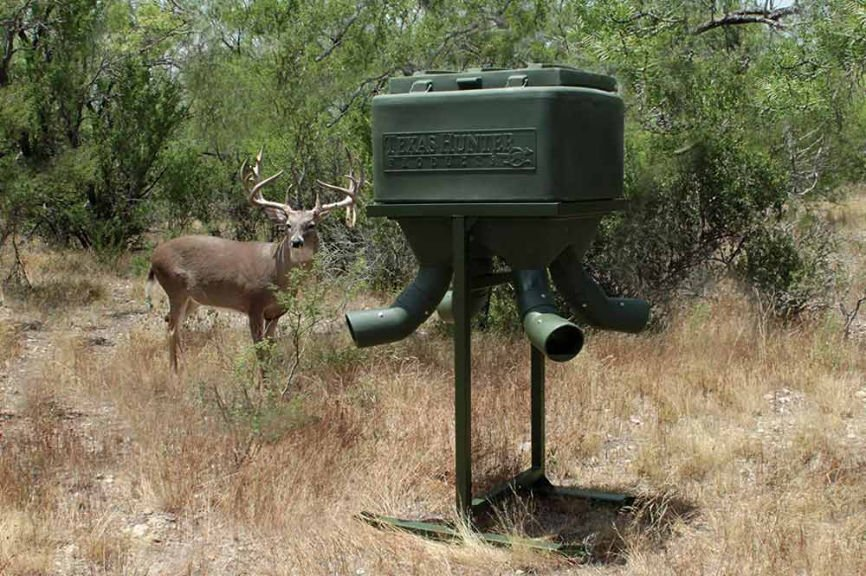 Deer in the wild with feeder