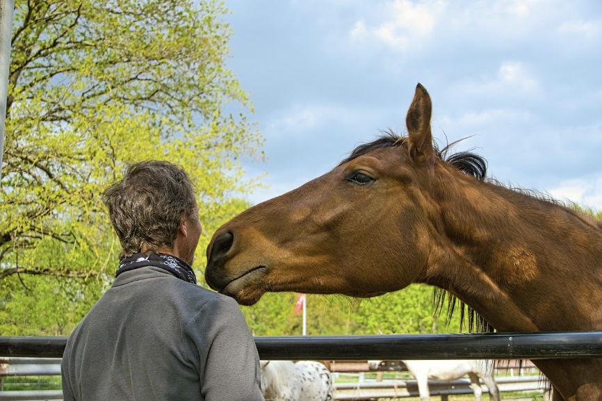 Man bonding with aa horse