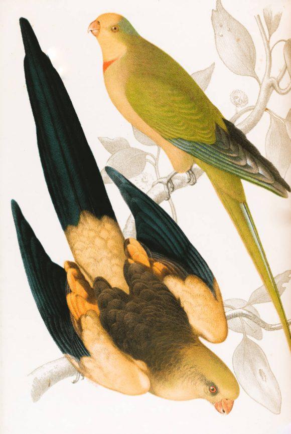 Australian Art, two birds on branches