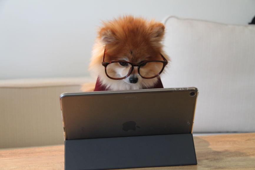 Dog using iPad
