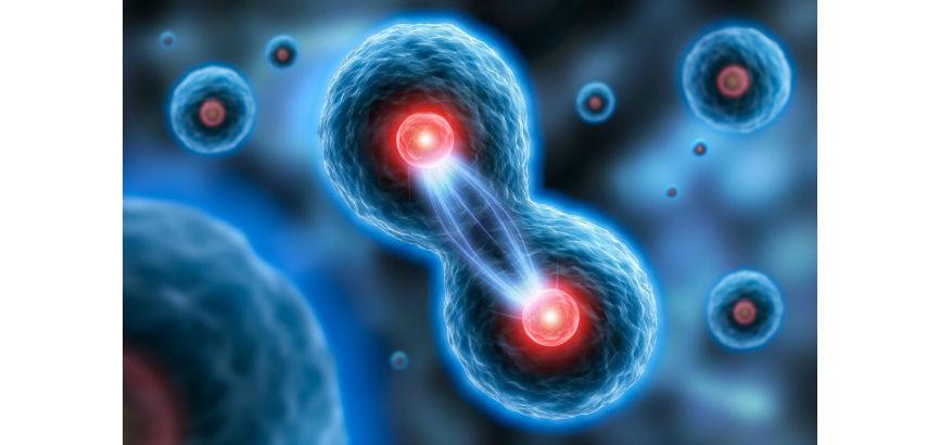 Human cells dividing